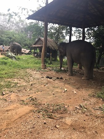 Wonderful experience Our guide was Aime our elephant got the day was called Seanuan and his mahout was called Ohm.