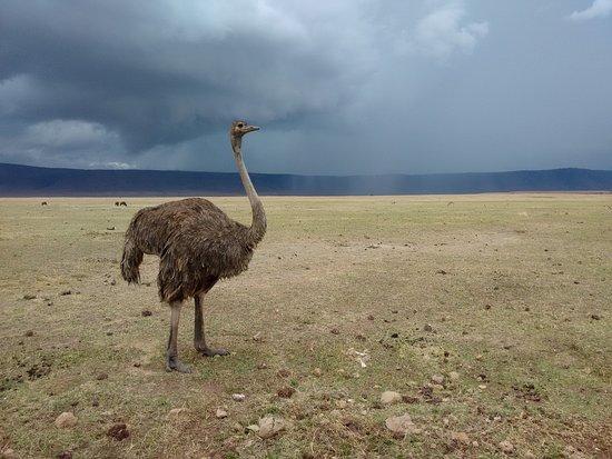 Paradies Safaris