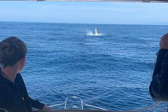 Batemans Bay صورة فوتوغرافية