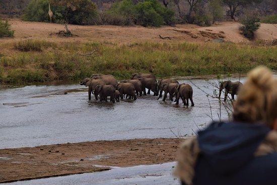 Malachite Tours and Safaris