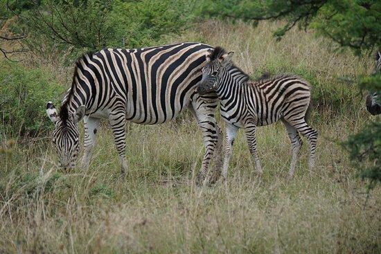 Kitano Tours And Safaris northern circuits( Safari / Tour, Agency / Company / operator, in, Arusha )