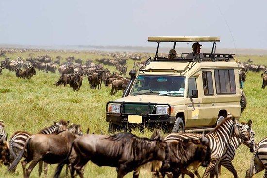 Gracepatt Safaris