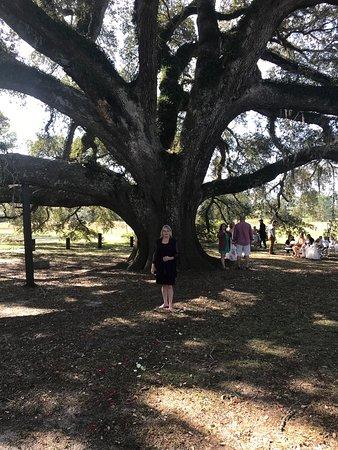 Geneva, AL: Sprawling Oak  Highlight of Robert Fowler Park