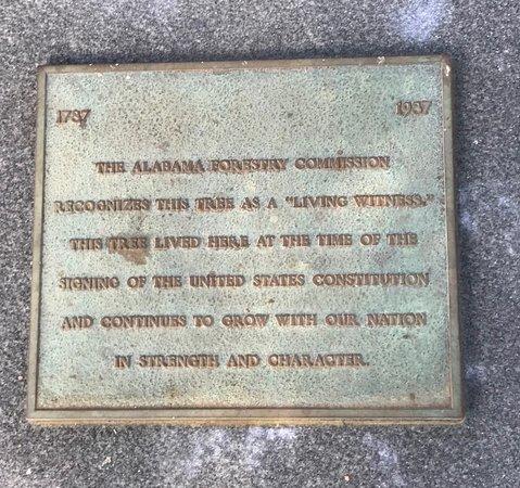 Geneva, AL: Monument explaining the significance of the Oak