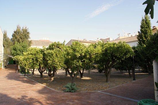 Valle de Lecrín, España: Orange trees garden