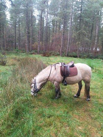 Callum having a break in the forest