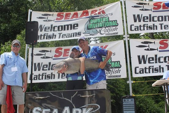 Hermitage, MO: Trophy blue catfish at  the SeaArk Owners Catfish Tournament.