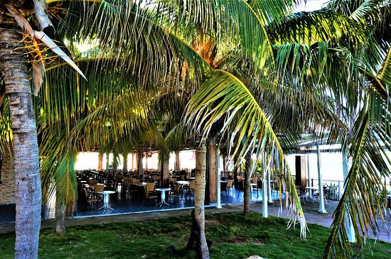 Beautiful coconut palms at Iberostar Bella Costa