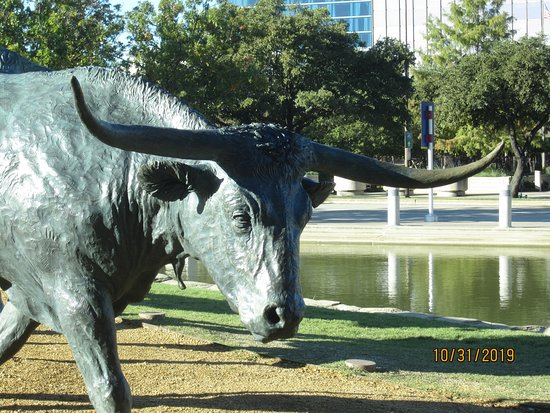 Longhorn Cattle Up Close Picture Of Dallas Cattle Drive Sculptures Tripadvisor