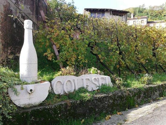 Colesel