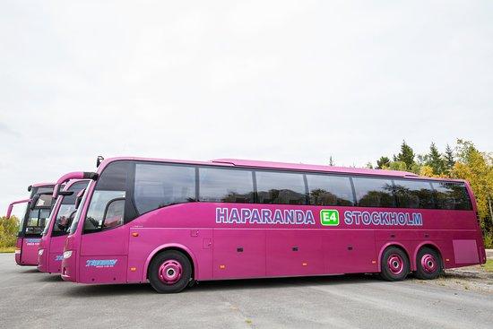 Tapanis Buss