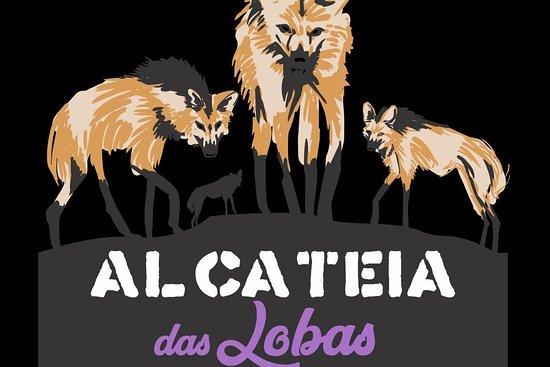 Alcateia das Lobas Oficial