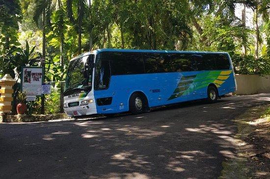 Cocos tours jamaica