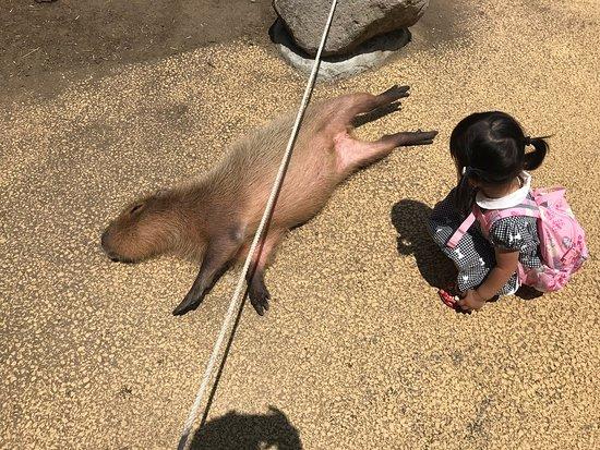 Capybara Garden