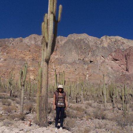 Cotahuasi, Peru: Bosque de cactus