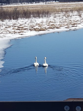 Remer, MN: Get out and view the wildlife