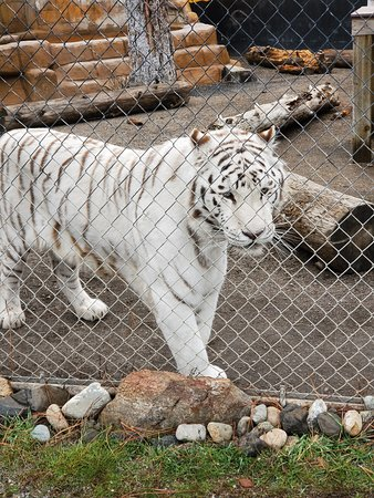 Cat Tales Zoological Park Mead All You Need To Know