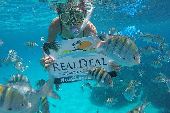 Real Deal Roatan Tours