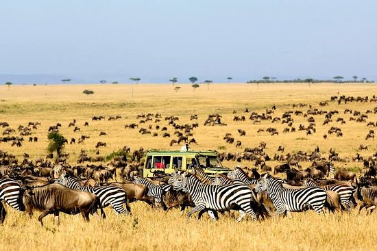 Kidepo Valley National Park, Uganda: Game Drives in Kidepo are one of the key most sought activities for any Savannah game park and are also the main activity in Kidepo National Park. Game drives are done early morning or late in the evening. Therefore they are divided into Night Game Drives and the normal day time game drives. #tryatour with us #we take you anywhere #city and #cultural trips #honeymoon and #vacation #packages #explore #discover#adventure #website:www.africaexquisitetours.com