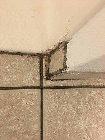 Burbank, IL: Mold around shower