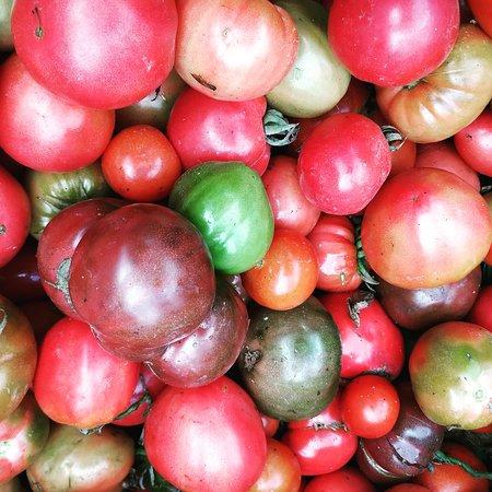 Medellín, Colombia: Organic tomato