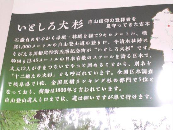 Itoshiro no Osugi