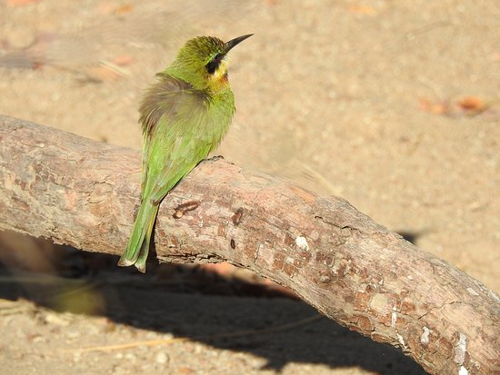 Sorry Julian forgot the name of this bird - perhaps you can add it