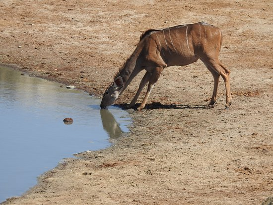 at one of the waterholes