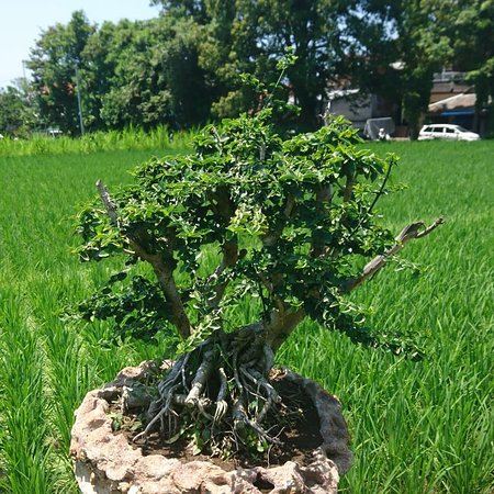 Bali Akah Bonsai Class Klungkung 2021 All You Need To Know Before You Go With Photos Tripadvisor