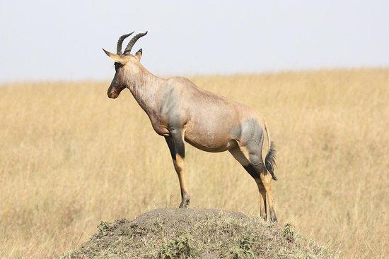 Kumekucha Africa Safaris Tours