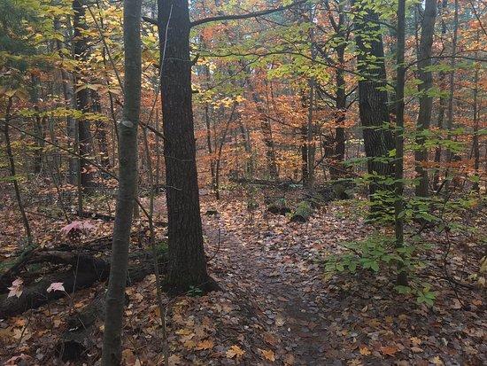 Durham Regional Forest