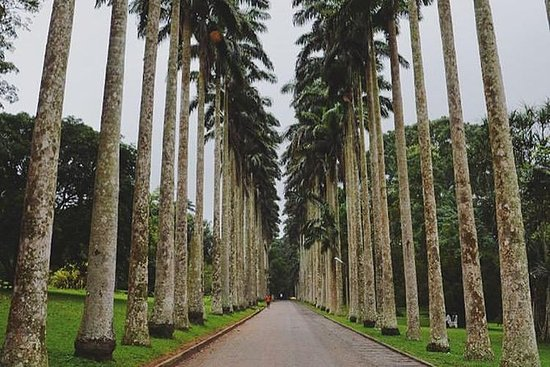Aburi Botanical Gardens And Boti...