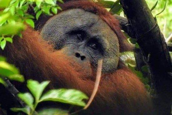 Day orangutan trek