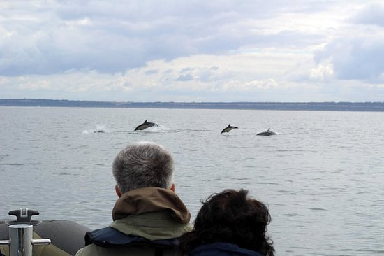 海豚观赏里斯本私人之旅