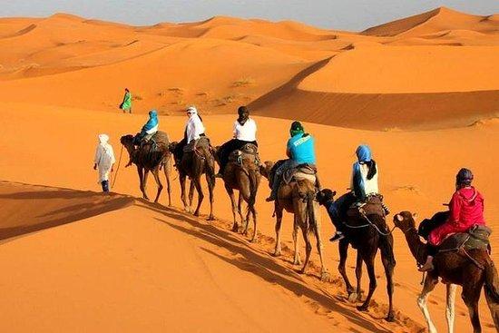 丹吉尔骑骆驼