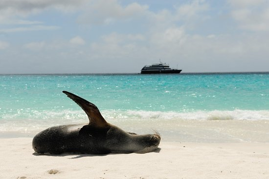GalapagosAboard Cruises