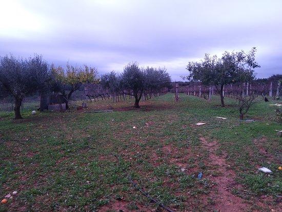Assentiz, Portugal: Distante 1 km do centro da vila da Marmeleira.