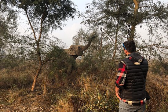 Foto de Everything Elephant, Sauraha: Bathing beauties :) - Tripadvisor