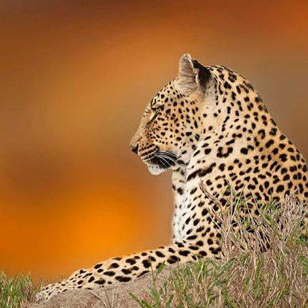 Olaro Safaris