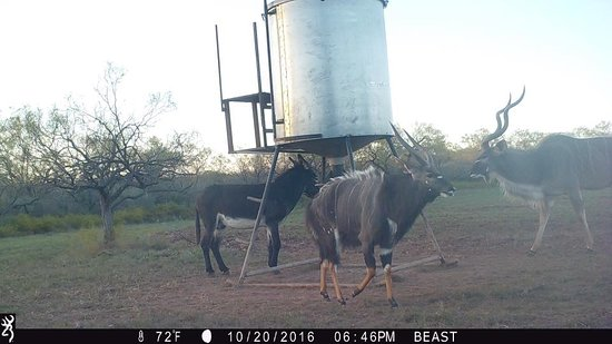 Game Cam in Brady! Can you guess the animals ?