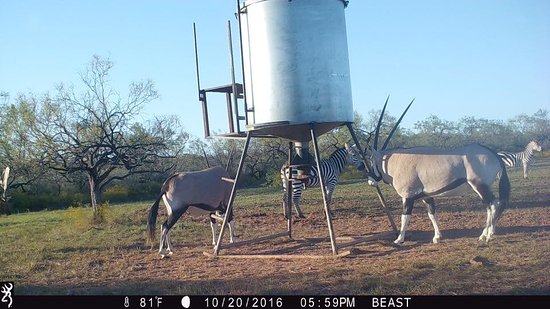 Game Cam in Brady! Can you guess the animals?