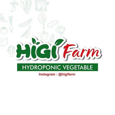 Higi Farm Hidroponik