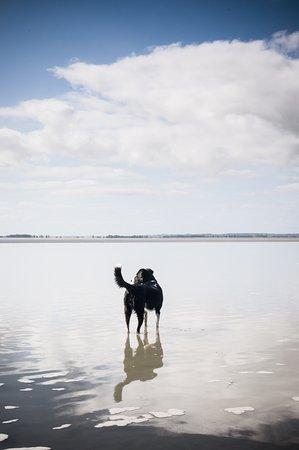 Imafa, le chien guide