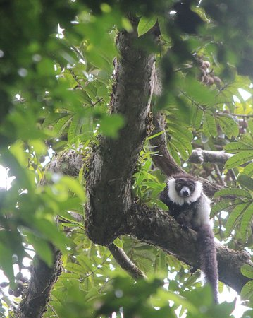 Tampolo, Madagascar: Nosy Mangabe excursion en route to the lodge was fantastic and affords different wildlife like the Black and white Ruffed lemurs. I loved it so much I went back to the island a 2nd time during my 11 night stay.