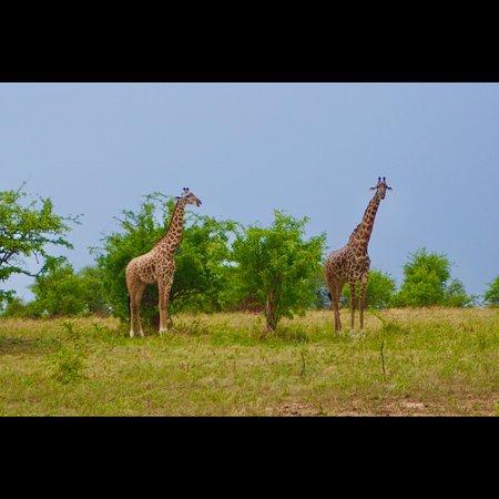 3 Day Private Safari