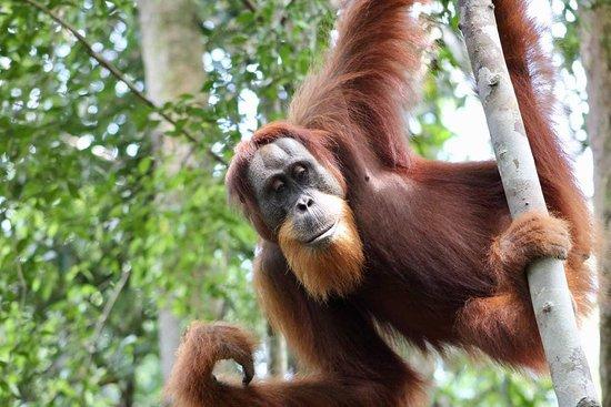 Orangutan Treks