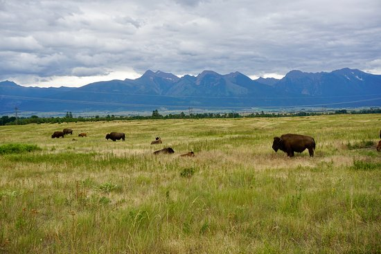 Moiese, Монтана: More Big Shaggy's