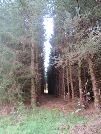 Tillicoultry, UK: Damhead wood