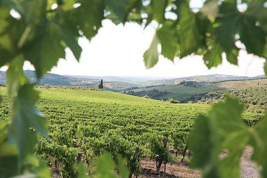 Halvdagsvinrundtur i Chianti från ...