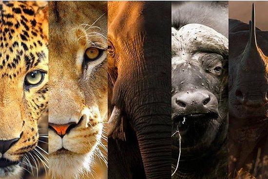 迪诺肯野生动物园全日游
